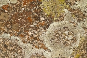 Lichen on boulder