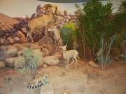 Visitor Center diorama