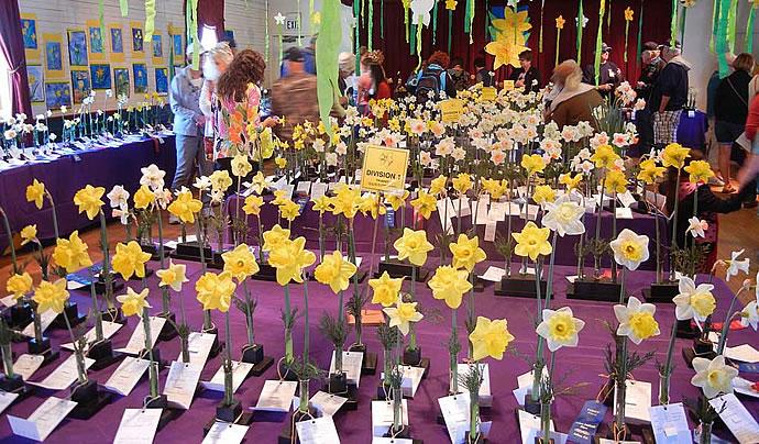 Julian's Daffodil Show