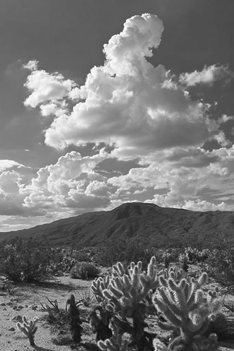 Thunderheads and Cholla