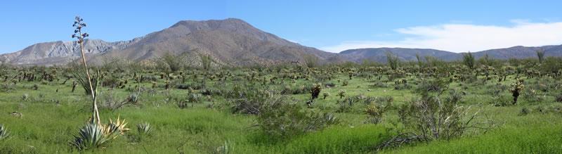 Desert Green, Mine Wash bajada