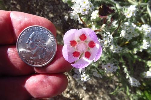 Five Spot and a Quarter