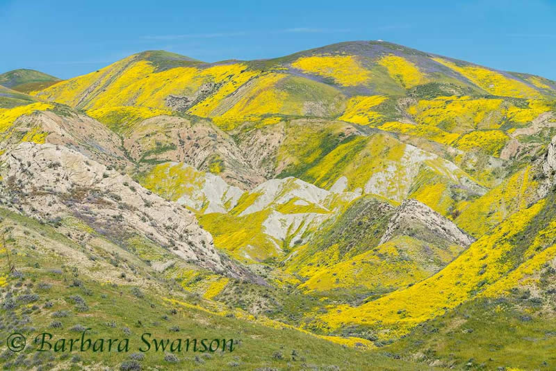 Painted mountain, Temblor Range