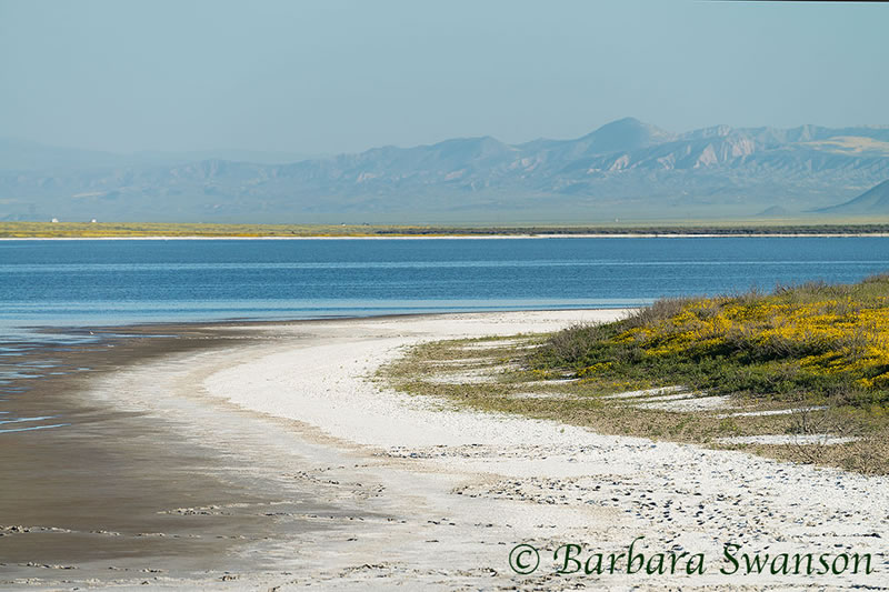Soda Lake beach, Carrizo Plain